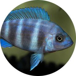 profil-sebastian