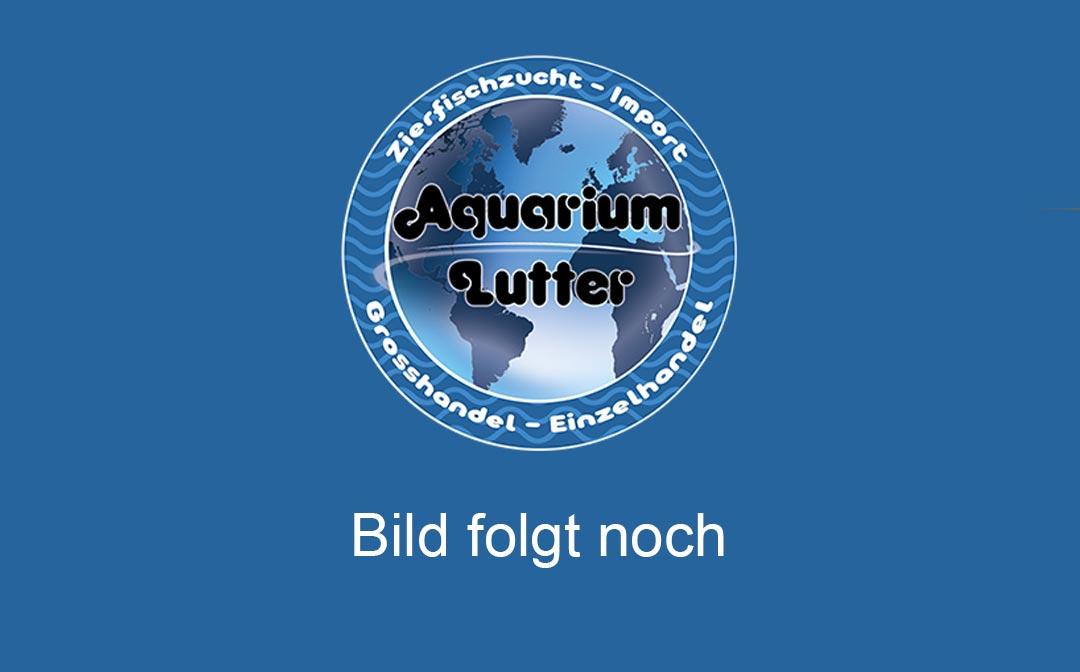 bild-folgt-noch-aquarium-lutter-1