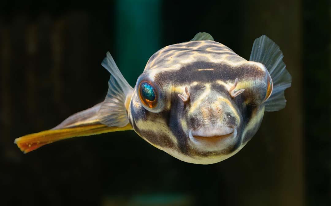 stockliste-diverse-aquarium-lutter