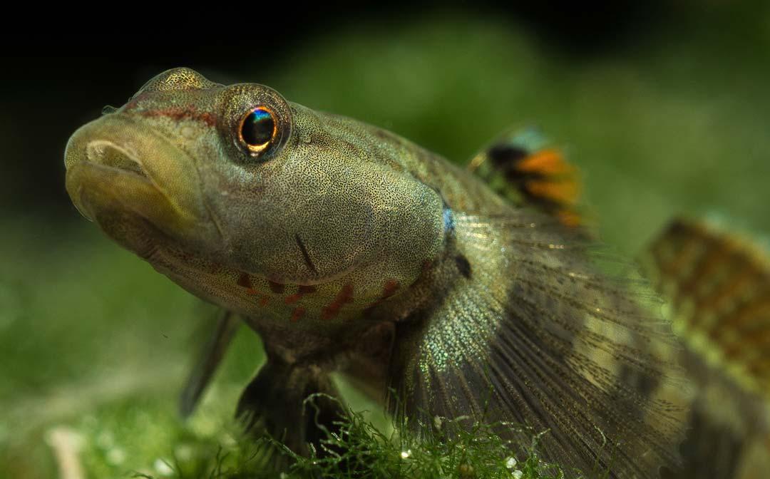 stockliste-grundeln-aquarium-lutter