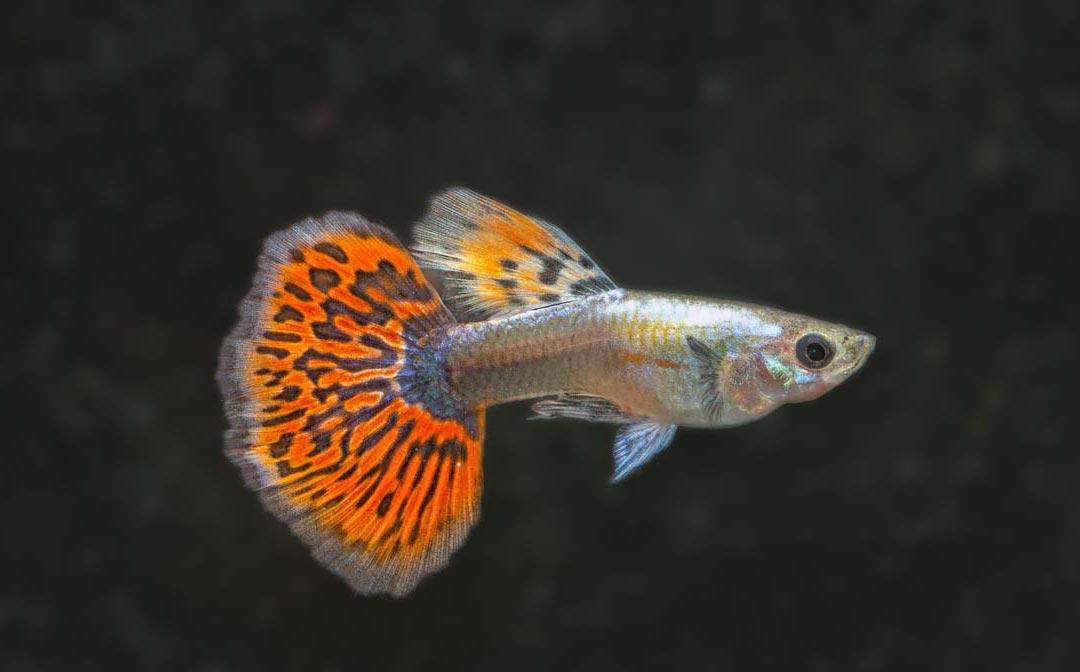 stockliste-lebendgebaerende-aquarium-lutter