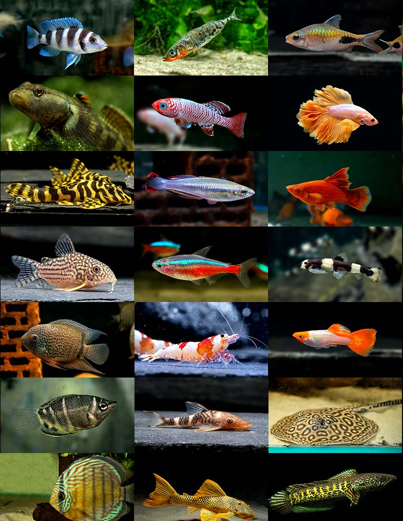 aquarium-lutter-start-collage-3