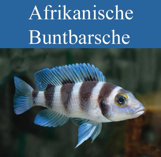 galerie-vorschau-afrika