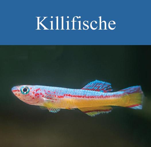 galerie-vorschau-killi-1