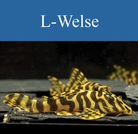 galerie-vorschau-l-welse