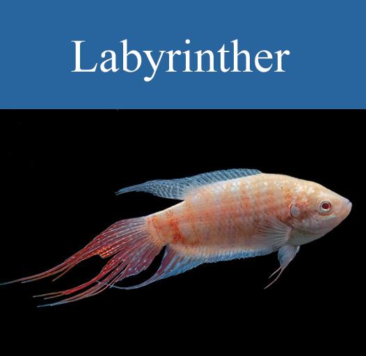 galerie-vorschau-labyrinther