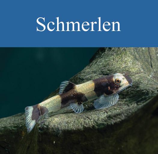 galerie-vorschau-schmerlen